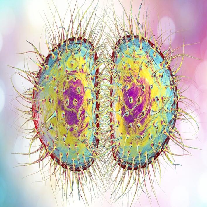 akut-bakteriyel-menenjit